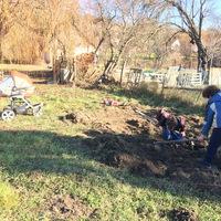 Januári kertészkedés, korai hagymások