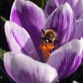 Napszemcsis fickók akcióban - gyűjtögető méhek