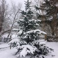 Fehér karácsony?