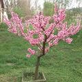 Tavaszi virágtengerek