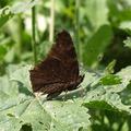 Pillangók és mások
