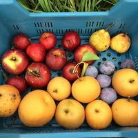 Ősz eleji gyümölcskosár