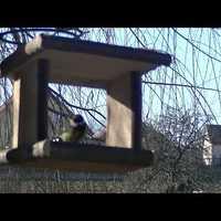 Cinkelesen - madáretető