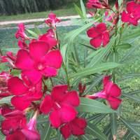 Kerti örömök - virágok és bogyós gyümölcsök