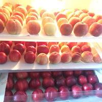 Őszibarack és nektarin kínálat a hűtőszekrényben