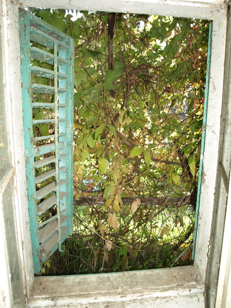 Szőlővel befuttatott tornácra néző ablak