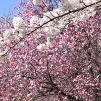 Tavaszi pillanatok
