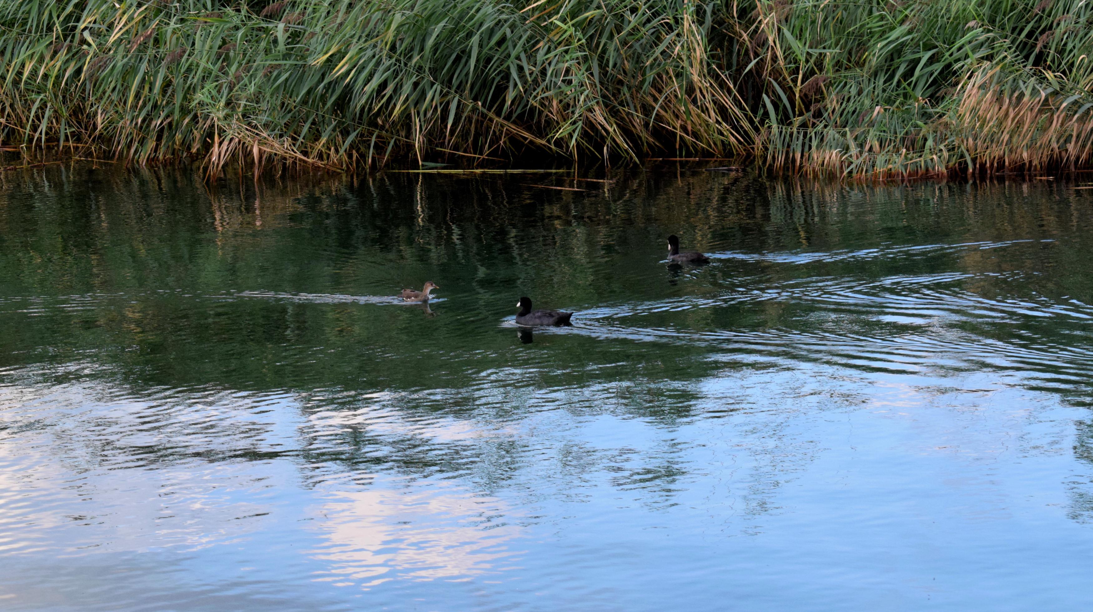A tó nagyon tiszta, így élővilága rendkívül gazdag.