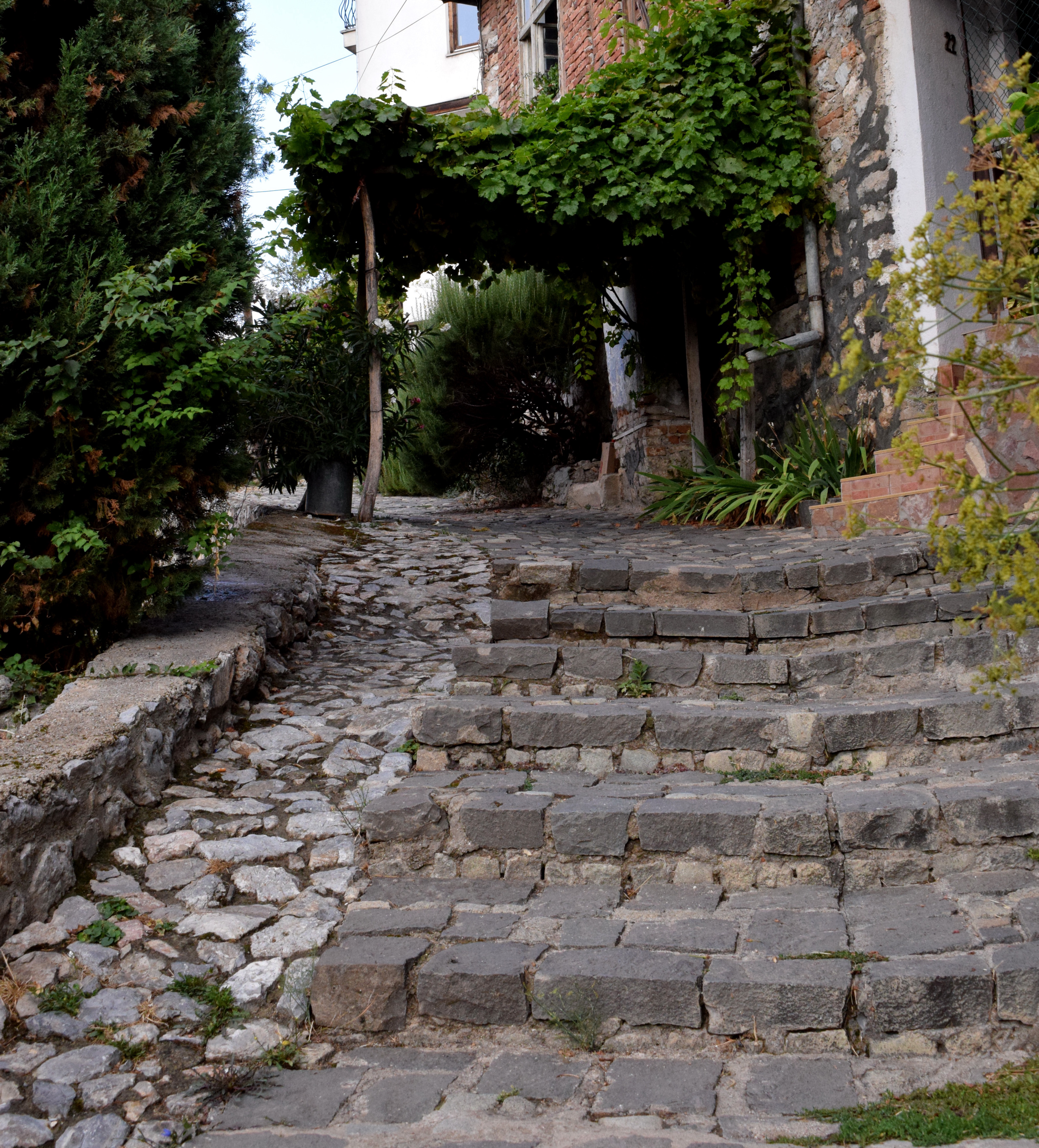 A városkép szerves részét képezik az utcák, vagy udvarok felett futtatott szőlők, kivi növények.