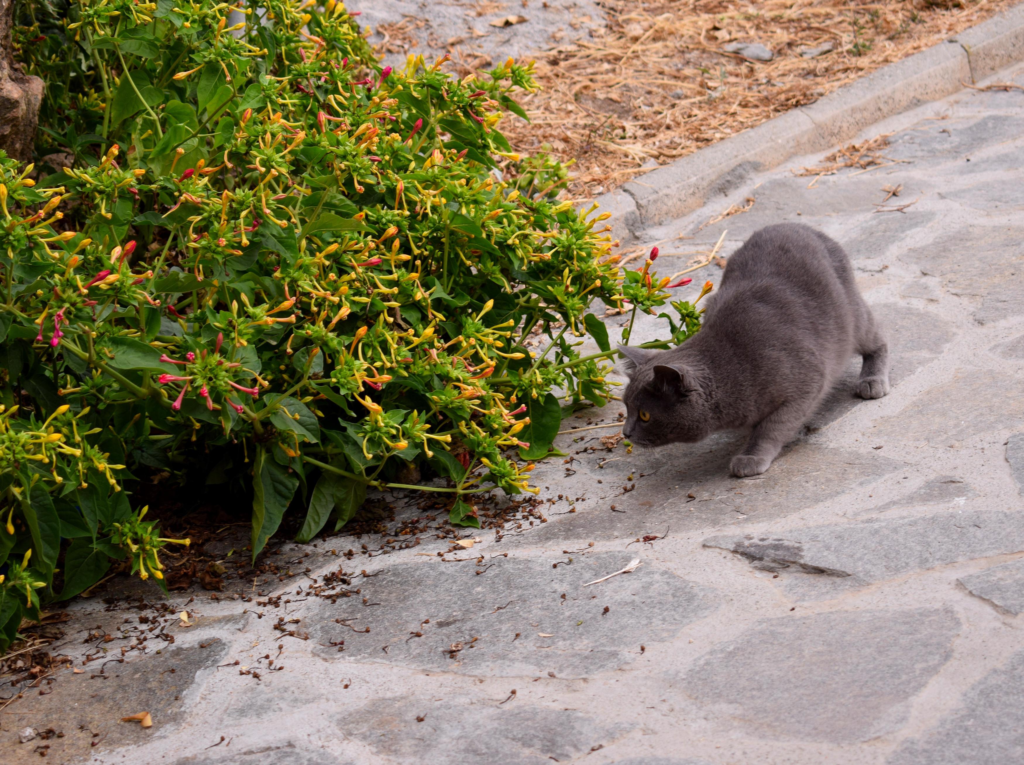 A város élővilágához továbbá hozzátartozik a rengeteg macska és kutya az utcákon. Ez éppen valami után vadászott, és teljes figyelmét a zsákmányra összpontosította.