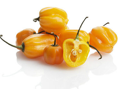 hot-pepper-habanero-burkina-yellow-2044-p.jpg