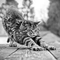 Szabadság, szerelem, macskák 2.