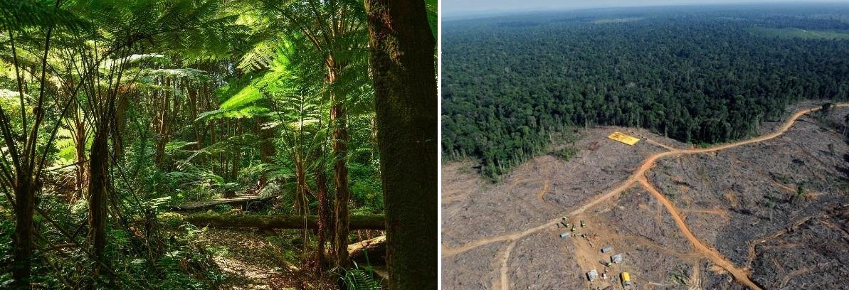 dzsungel2.jpg
