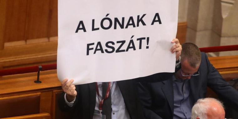 lofasz.jpg