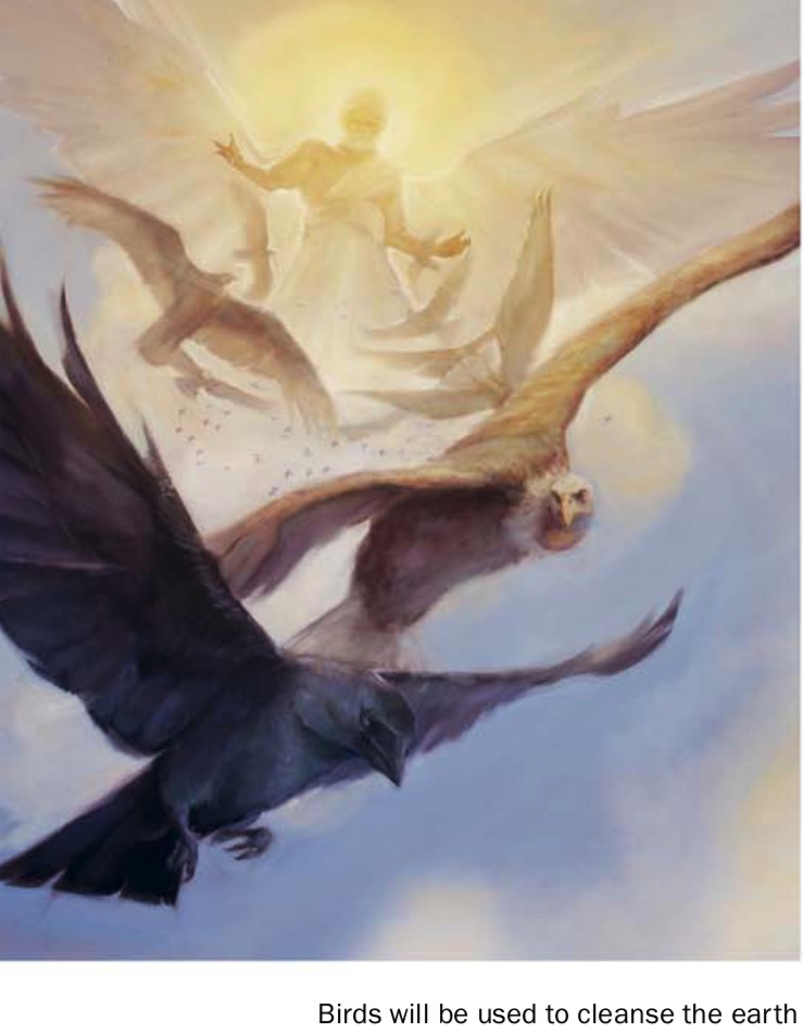 birds-armagedon-watchtower-simplified-study-2014-feb-15-p8.jpg