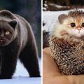 Így nézne ki minden macskaként :D