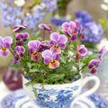 Tavaszváró ötletek a virágok szerelmeseinek