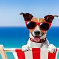Kutyamelegben ide menjetek! Ezek a legjobb kutyás strandok a Balaton körül