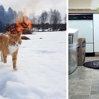 10 bizonyíték arra, hogy macskád maga az ördög!