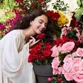 Megérkezett a Dolce Rose | Parfüm rózsakedvelőknek