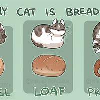 Segítség! A macskám úgy néz ki, mint egy kenyér :)