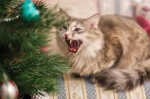 Így néz ki egy macskás karácsony