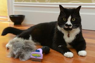 Így szőrtelenítsd a macskádat