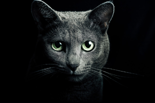 A macskákat is lehet hamisítani?
