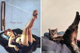 Ezek a macskák jobban pózolnak, mint a modellek!