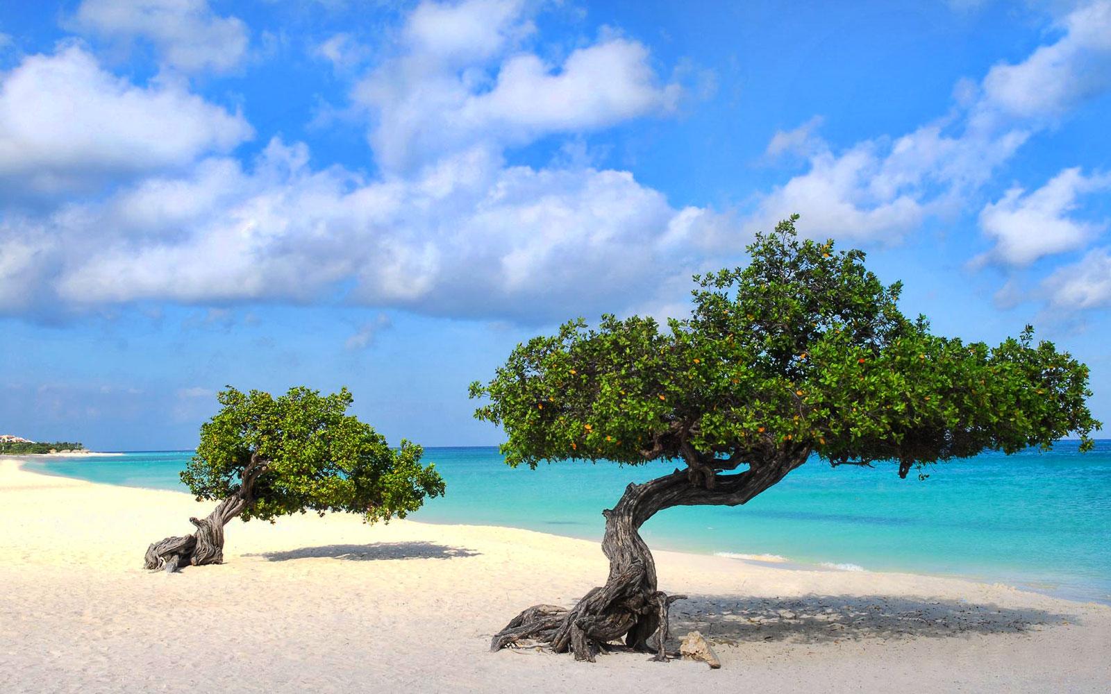 3_eagle_beach_palm_eagle_beach_aruba.jpg