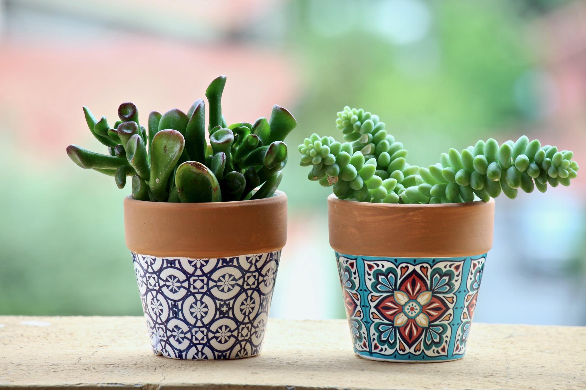 Ezek a legstrapabíróbb növények!
