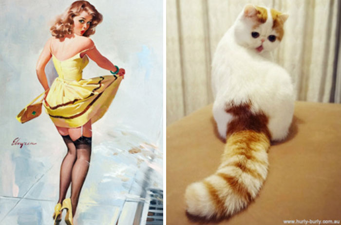pinupcats_4.jpg