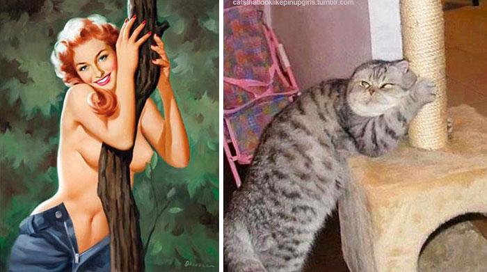 pinupcats_6.jpg