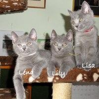 Lisa - 8 hét - 8 weeks (2011-04-12)