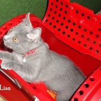 Lisa - 12 hét - 12 weeks (2011-05-10)