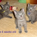 Mario - 6. hét - 6 weeks (2011-07-10)