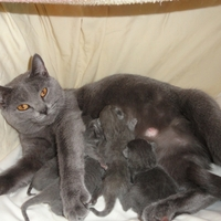 Megérkeztek az M cicák - M-kittens arrived (2011-05-29)