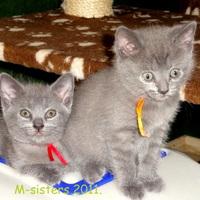 Mario - Az M lányok... 6. hét - The M girls... 6 weeks (2011-07-13)