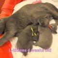 Lisa - 4 hét - 4 weeks (2011-03-15)