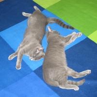 Együtt... III. - Together... III. (2011-09-23)