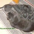 Lisa - 11 hét - 11 weeks (2011-05-03)