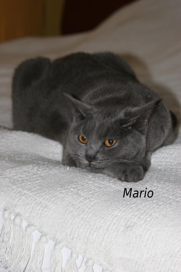 IMG_3327_Mario.JPG