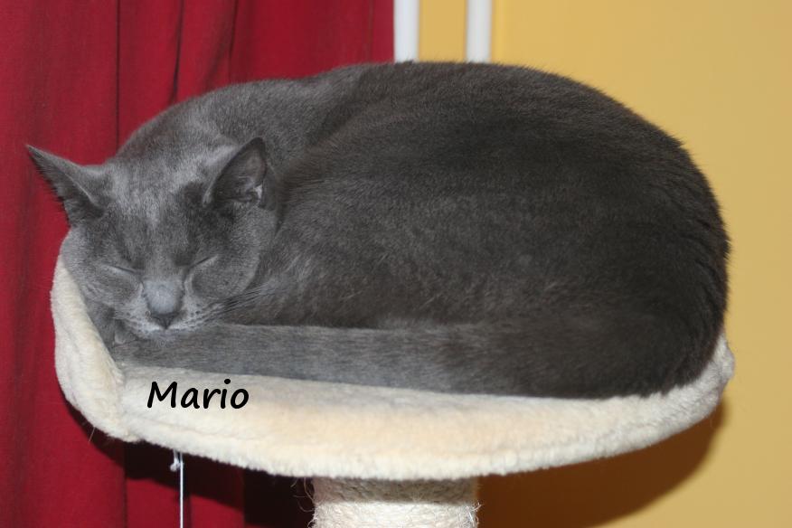 IMG_3384_Mario.JPG