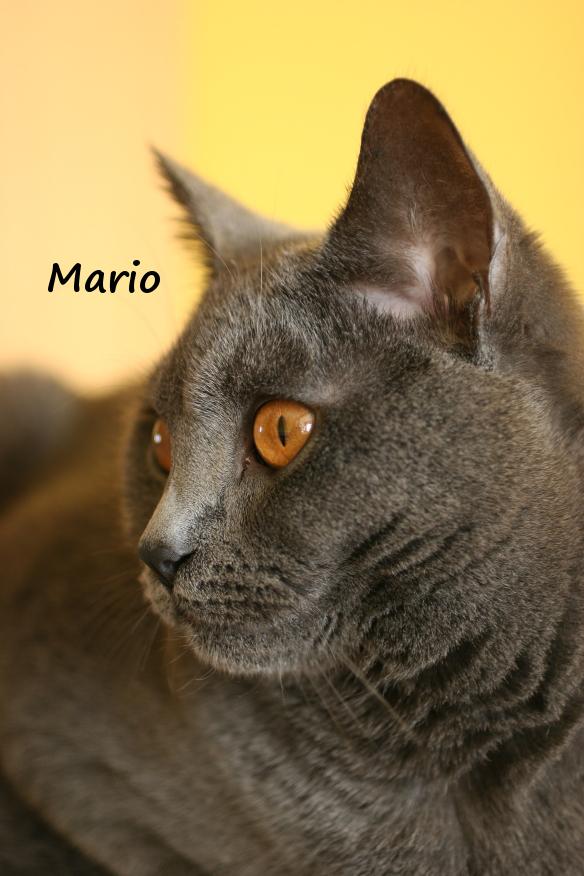 IMG_3557_Mario.JPG