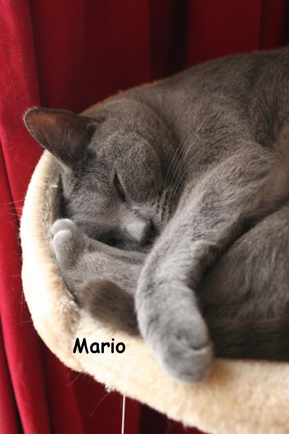 IMG_3616_Mario.JPG