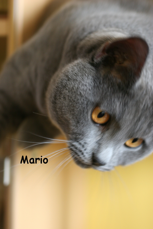 IMG_3626_Mario.JPG