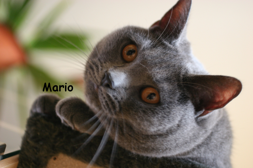 IMG_3651_Mario.JPG