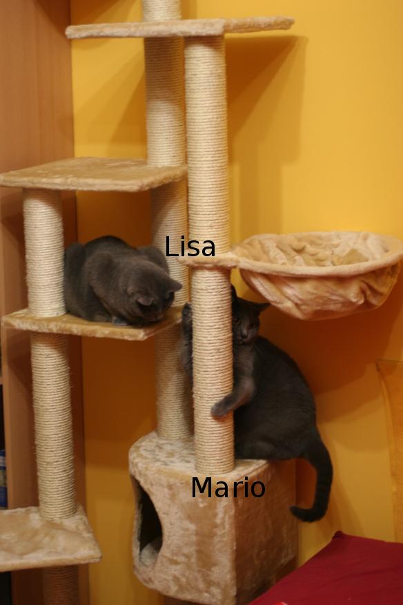 "IMG_3808_Lisa_Mario.JPG"""