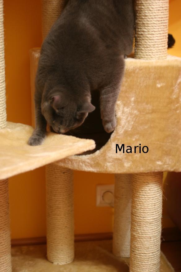 "IMG_3815_Mario.JPG"""