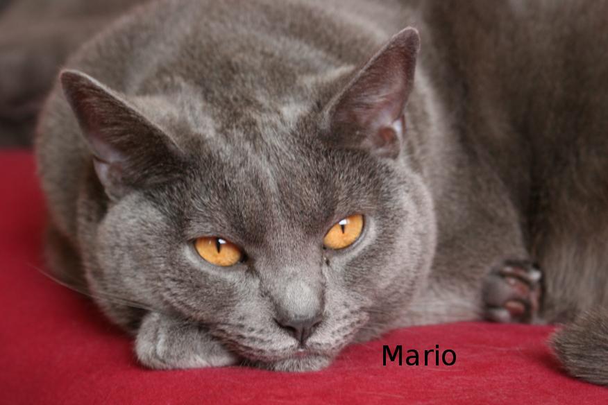 "IMG_3887_Mario.JPG"""